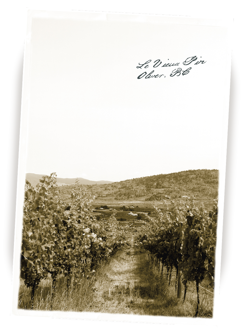 Brandolier Le Vieux Pin Vineyard Postcard