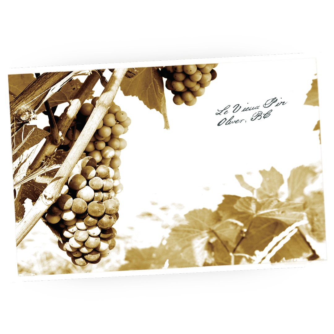 Brandolier Le Vieux Pin Perigee on vineyard table